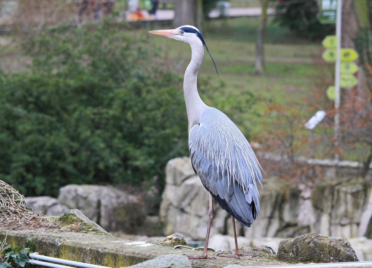 Frankfurt_Zoo_03