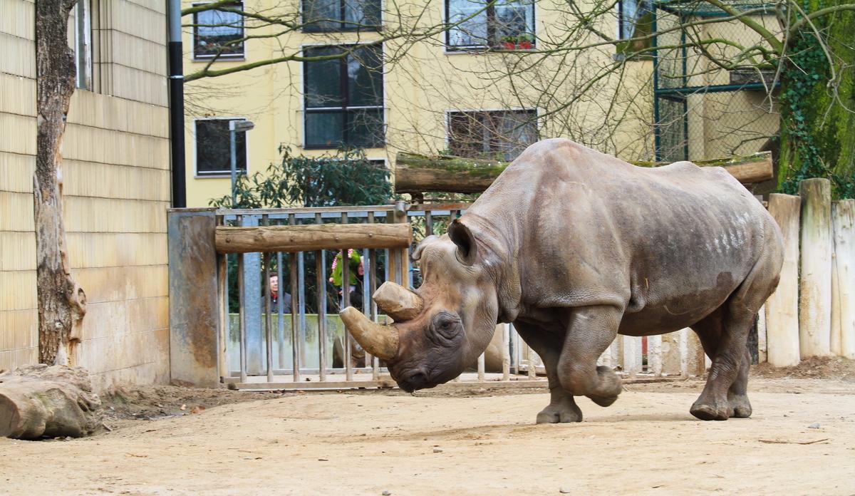 Frankfurt_Zoo_04